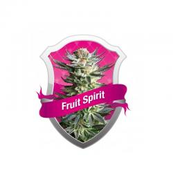Royal Queen Fruit Spirit Fem.