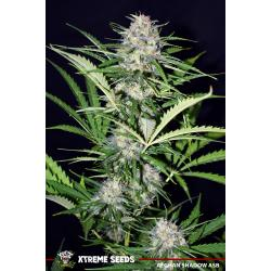 Xtreme Seeds Afghan Shadow ASB Auto - Imagen 1