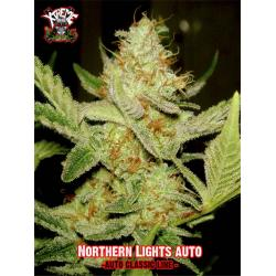 Xtreme Seeds Northern Lights Auto - Imagen 1