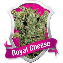 Royal Queen Royal Cheese Fast Version Fem. - Imagen 1