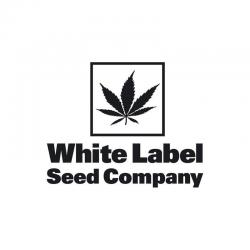 Sensi White Label Sativa Mix Fem. - Imagen 1
